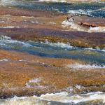 A Clean Reedy River